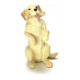 Labrador s kostí