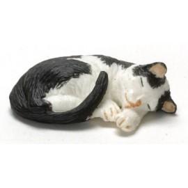 Spící černo-bílá kočka