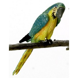 Modro-žlutý papoušek