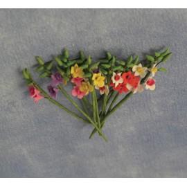 Pugety malých gladiol, 12ks