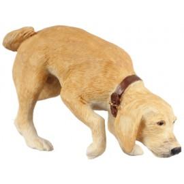 Čmuchající pes