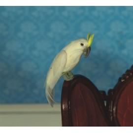 Papoušek bílý