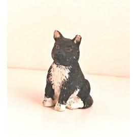 Kočka černobílá
